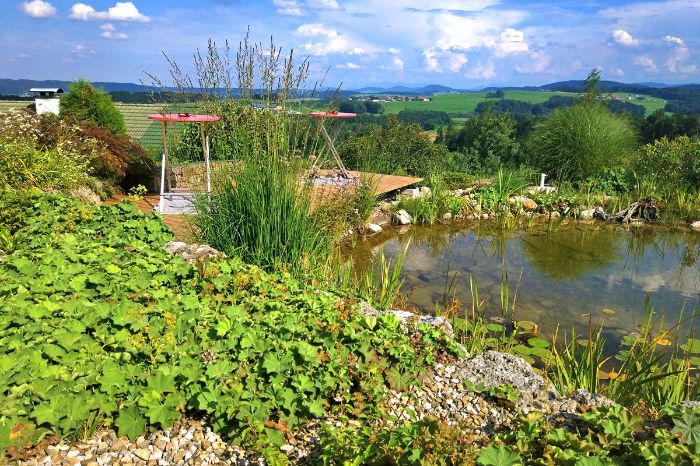 Pond with view at Salzburgs Lake District