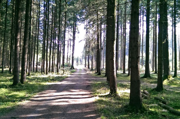 Cycle path through the woods near Lake Chiemsee