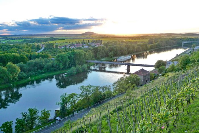 Vineyards along the river Elbe
