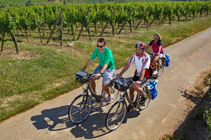 Cyclists at vineyards