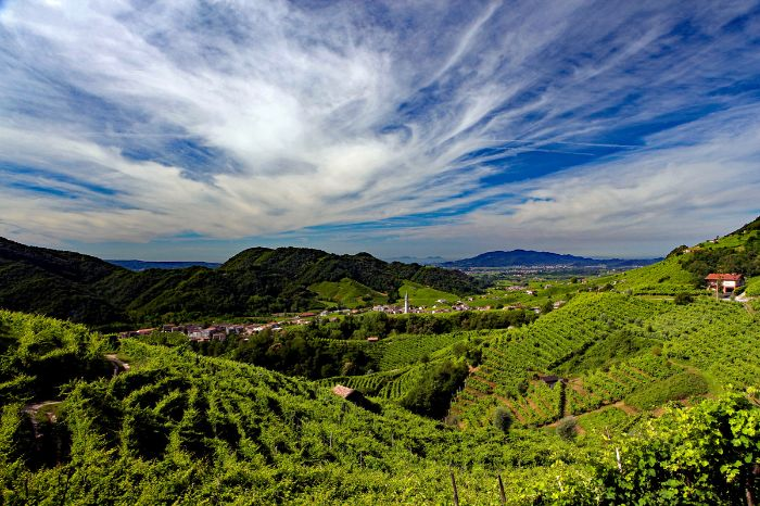 Beautiful view over the vineyards