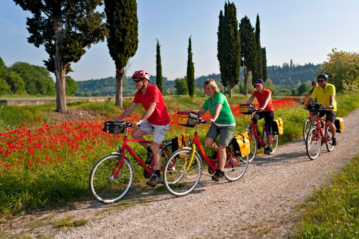Cyclists on cycle path next to a poppy meadow