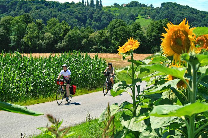 Cyclists and sunflowers
