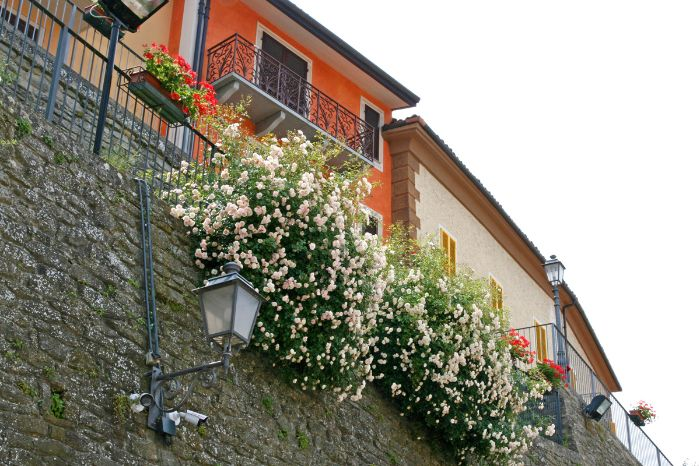 Flowers in Millesimo