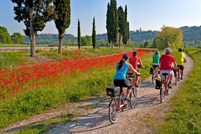 Group of cyclists next to a poppy meadow