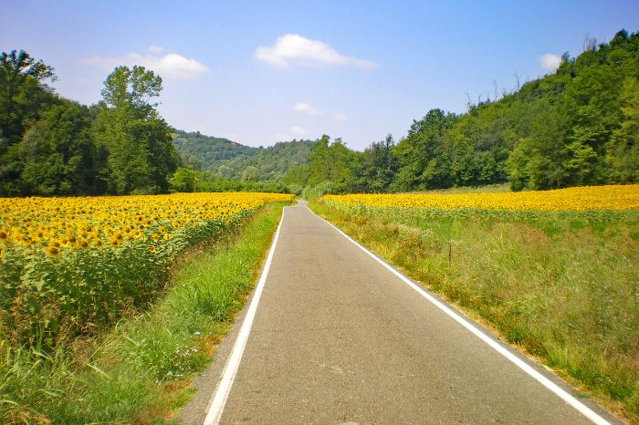 Street through a sunflower field