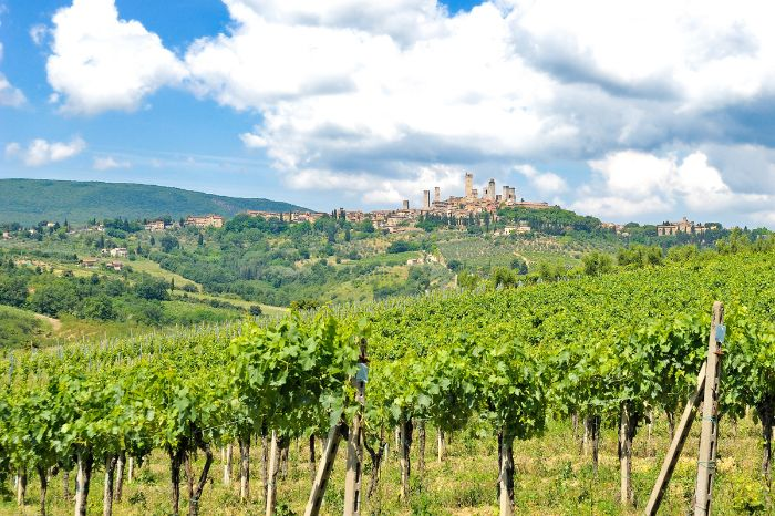 Vineyards, in the background San Gimignano