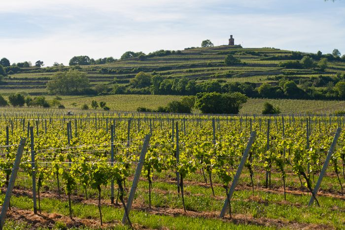 Bike tour along the german wine route