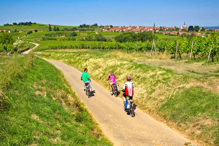Cycle path through vineyard