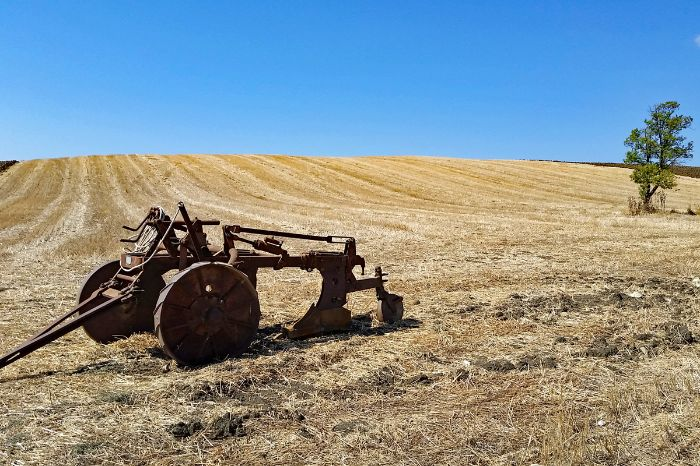 Plow in a field in the region Maremma