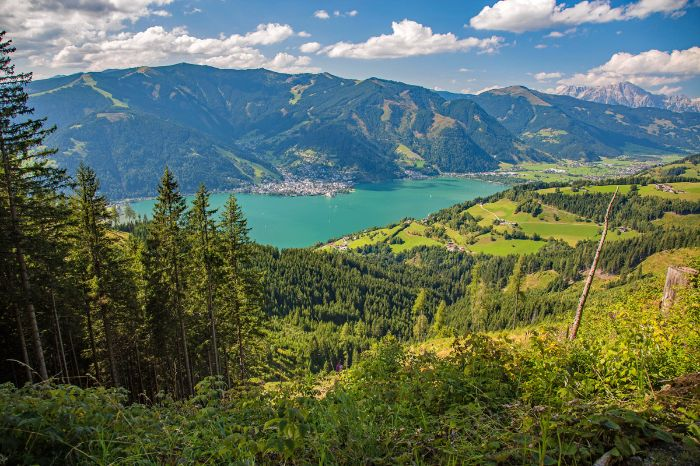 View over the woods to Lake Zellersee