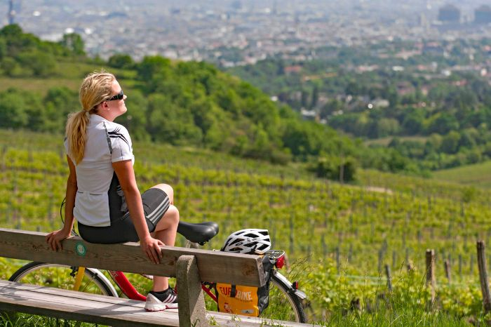Cyclist in the vineyards